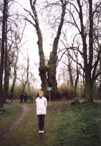 Topola biała w Lesznie