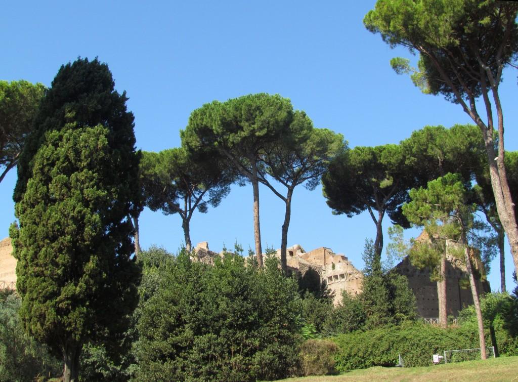 Przyroda na Palatynie w Rzymie