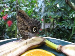 Pawilon motyli w Dierenpark w Emmen w Holandii