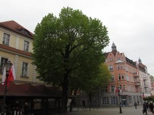 Stary Rynek w Zielonej Górze