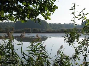 Rezerwat przyrody Stawy Milickie