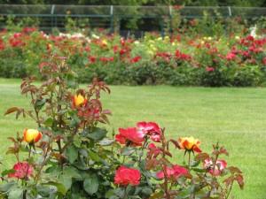 Ogród różany w pałacu w Fertőd na Węgrzech