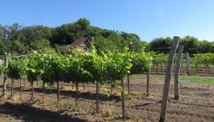 Winnica na Półwyspie Tihany nad Balatonem na Węgrzech