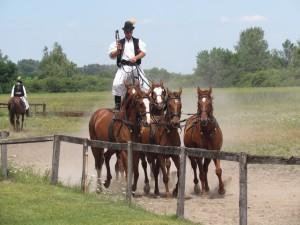 Pokazy jazdy konnej w Bugac Puszta na Węgrzech