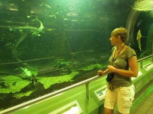 Tisza-tavi Ökocentrum na Węgrzech