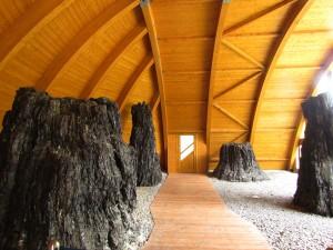 Skamieniałe drzewa w Ipolytarnóc na Węgrzech