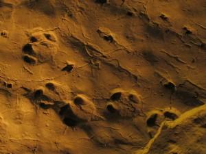 Skamieniałe ślady prehistorycznych zwierząt w Ipolytarnóc na Węgrzech