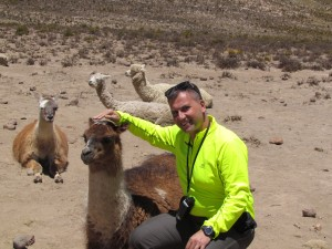 Lamy i alpaki w drodze do Kanionu Colca