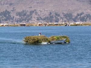 Zapas trzciny do naprawy Wysp Uros