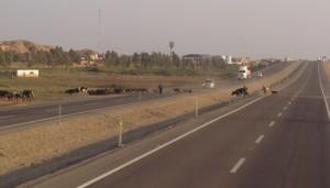 W drodze do Paracas