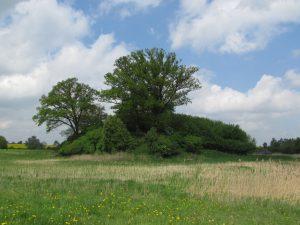 Pozostałości zamku w Suliszewie