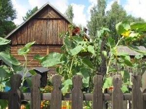Chałupa Szczepana Muchy w Sieradzkim Parku Etnograficznym