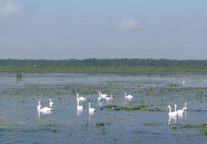 Jezioro Drużno widziane podczas rejsu Kanałem Elbląsko-Ostródzkim