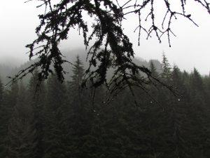 W drodze na Przełęcz Iwaniacką