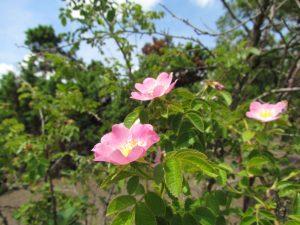 Naturalne rosarium w Górach Pieprzowych
