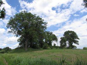 Pozostałości po zamku w Starym Dębnie