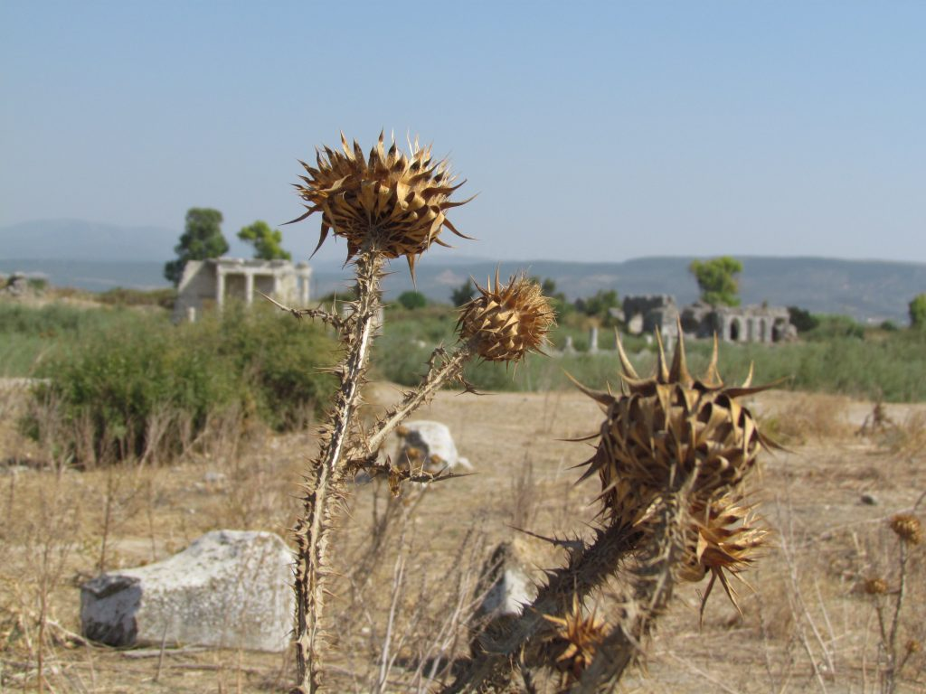 Roślinność w Milecie