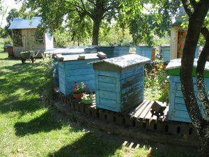 Skansen pszczelarski w Pszczewie