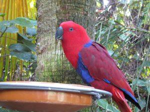Papuga w Loro Parque na Teneryfie