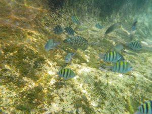 Rybki w lagunie Yal-Ku
