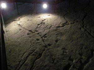 Ślady dinozaurów w Rezerwacie Sataplia