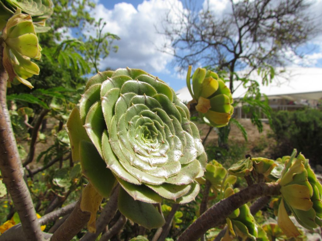 Roślinność na terenie świątyń Tarxien