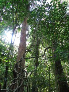 Dżungla w Palenque