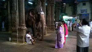 Błogosławiący słoń