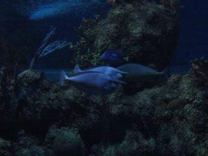 Malta National Aquarium w Qawra