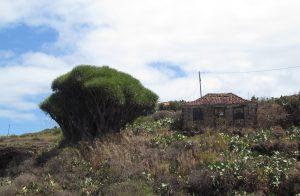 Santo Domingo de Garafia na La Palmie