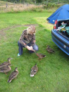 Kaczki na Campingu Faichemard Farm