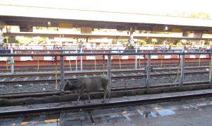 Dworzec w Katni