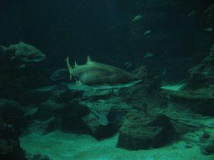 Oceanarium Mare Nostrum w Montpellier