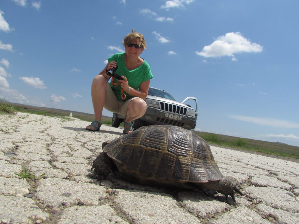 Żółw na pustyni