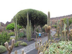 Jardin de Cactus, czyli ogród kaktusów w Guatiza na Lanzarote