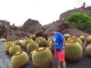 Trony teściowej w Jardin de Cactus w Guatiza na Lanzarote