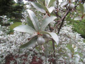Roślinność w Arboretum w Wirtach