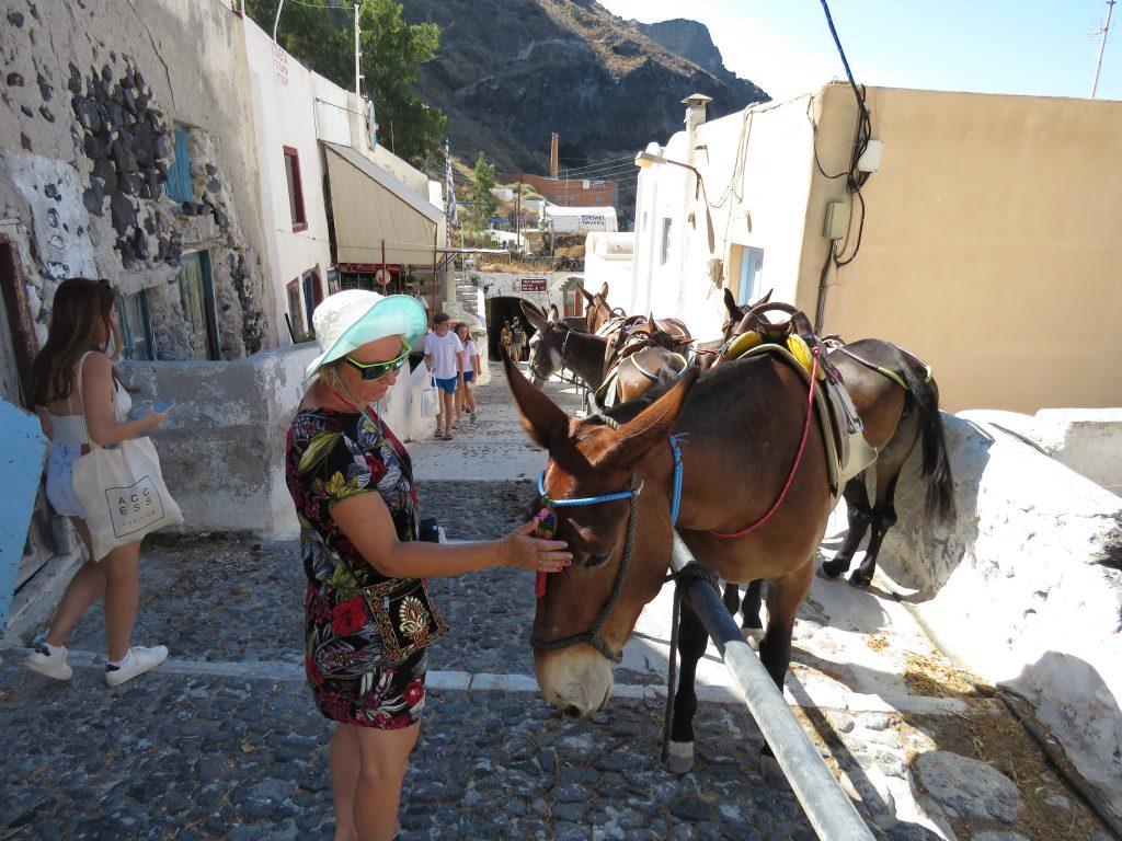 Osły i muły w drodze do portu w Firze