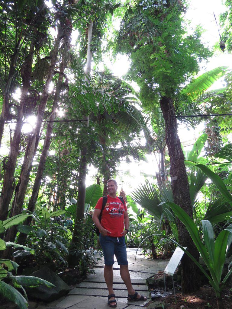 Palmiarnia w Ogrodzie Botanicznym przy Pałacu Rosenberg