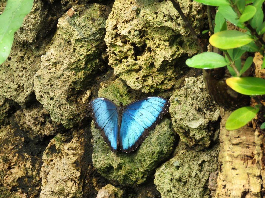 Dom Motyli w kopenhaskiej Palmiarni