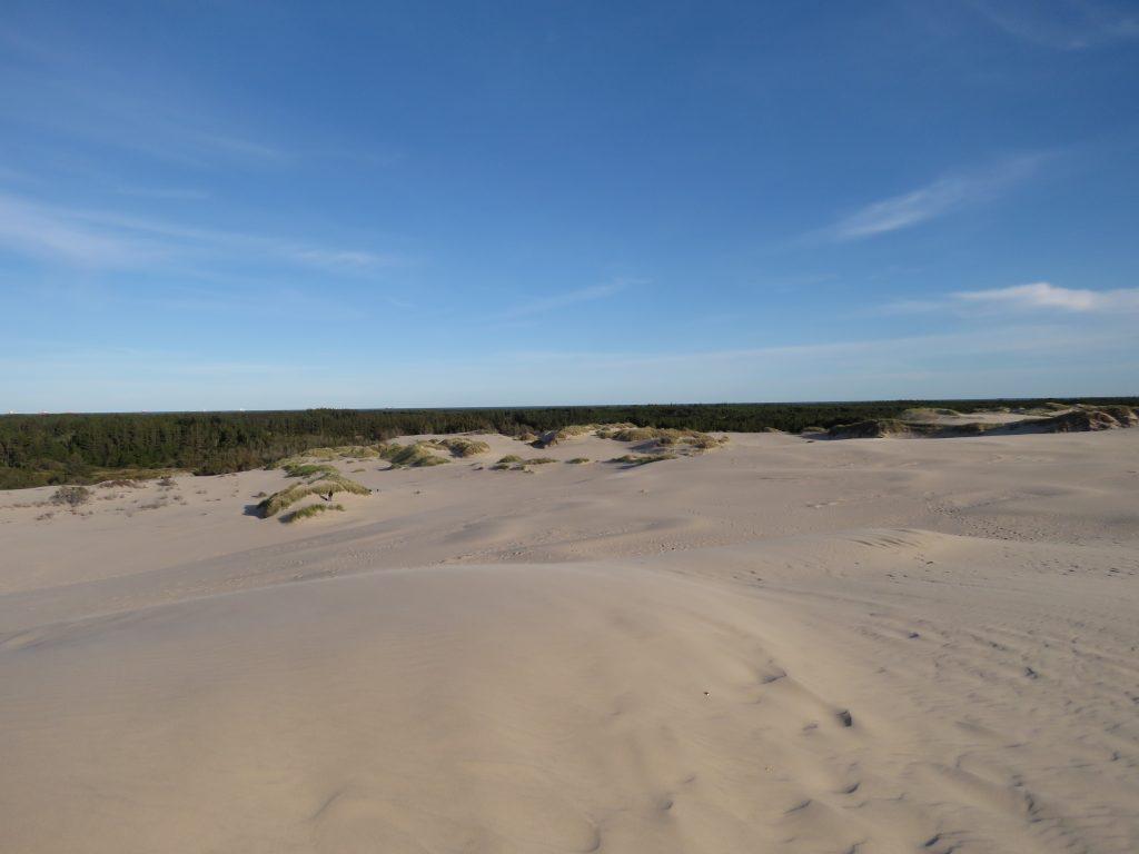 Ruchoma wydma Råbjerg Mile