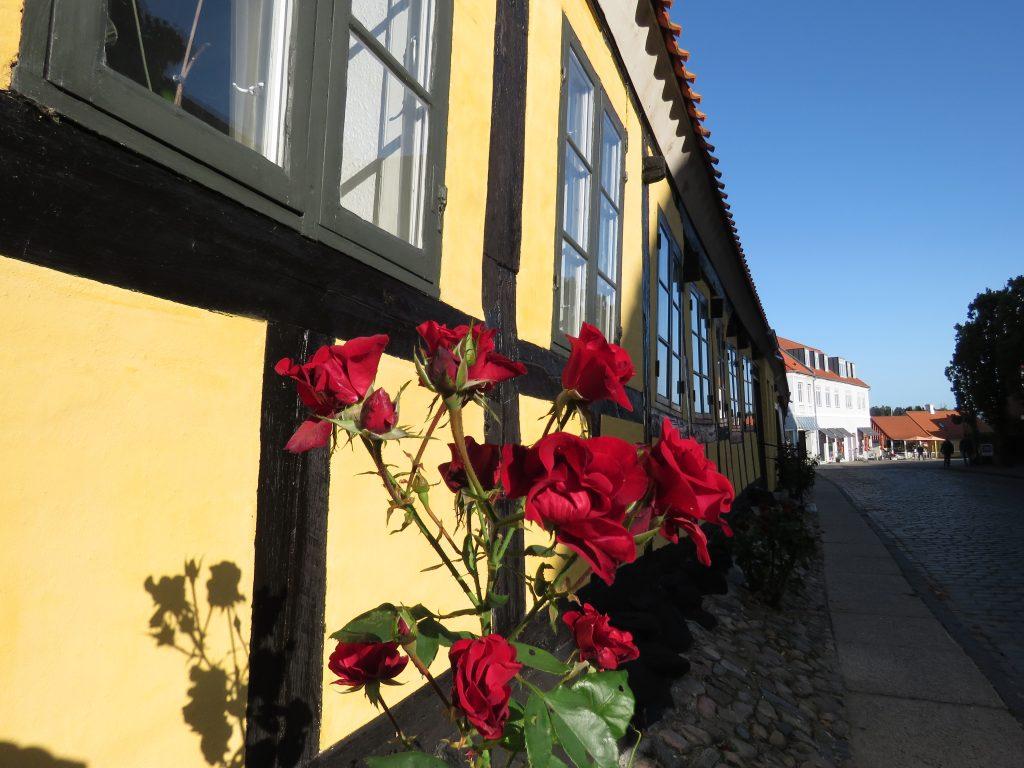Mariager - miasto róż